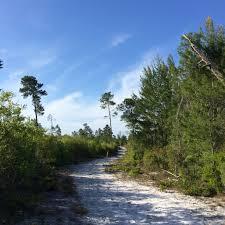 Hiking Black Hammock Wilderness Florida