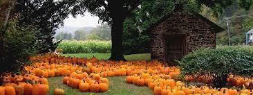 Pumpkin Patch Sauvie Island Corn Maze by 6 Portland Area Pumpkin Patches U2014 Lyft Blog
