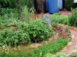 Combining Vegetables And Flowers In Your Garden