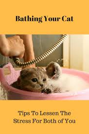 bathing cats bathing your cat png