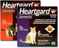 heartgard for cats heartgard for cats kittens