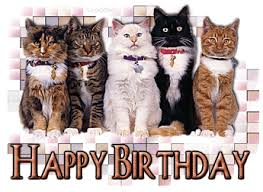 Happy birthday cats blink