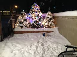 Best Christmas Tree Type For Allergies by December 2016 Hell U0027s Bells And Mast Cells