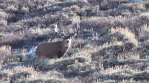 southern utah hunt and fish henry mountain muleys 2013