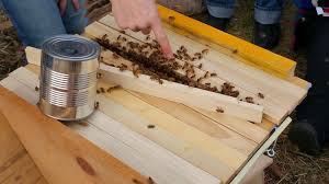 Girly Beez: Installing A Package Bkeepers Report Honey Bee Losses Down But Problem Remains 100 Backyard Bkeeping A Beginners Michigan Bkeepers Fight To Keep Hives In Backyard Photos Ann Arbor Shutterbugs Photography Mi Meetup Events Community Farm Of Bees Radio Earth Words October 2016 Chance Save Some Bees The Prospect Home Matthaei Botanical Gardens And Nichols Arboretum So You Think Want Be A Bkeeper Robin Hills Its All About The For This Grosse Ile Bkeeper Made 317 Current By Adams Street Publishing Co Issuu