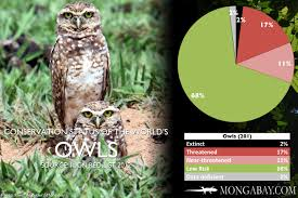 CHART: The World's Most Endangered Owls Barn Owl Outdoor Alabama Owl Wikipedia Trust On Twitter Cservation Handbook A Wednesday Birdnation Wirral Home Facebook Audubon Field Guide Review Course By Martin Oconnor Arbtech Legal Status The Rspb Eastern Singapore Birds Project Barnowltrust Owls Owls Of The Niagara Region