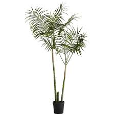 flora kentia palme h185 cm grün