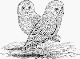 Pin Burrowing Owl Clipart Printable Coloring Page 9
