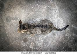 Top View Cat Isolated On Cement Floor Background 562089811