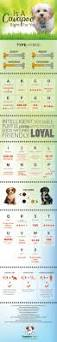 Cavapoos Do They Shed by Best 25 Cavapoo Ideas On Pinterest