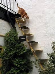 best 25 cat stairs ideas on cat climbing shelves cat