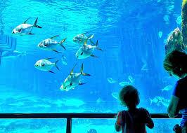 aquarium geant a visiter belgique top des zoos dans le monde proxifun découvrez les meilleurs zoos