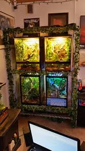 Crested Gecko Shed Box 204 best crested gex images on pinterest amphibians reptiles