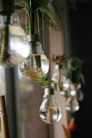 light bulbs for plants enchanting on modern home decoration or 17