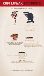 Free Infographic Submission Site Infographicplace Making Of Kopi Luwak Coffee If Youre A Addicted Then Individuals Many