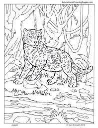 Jaguar Coloring Jungle Animals African Africa