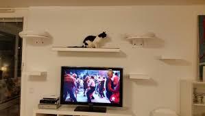 kleiner katzenratgeber