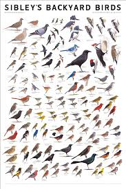 10,000 Birds | Sibley's Backyard Birds Poster The Joy Of Bird Feeding Essential Guide To Attracting And Birders Break Records For Great Backyard Count Michigan Radio New Guides Backyard Birding Add Birders Joyment Aerial Birds Socks Absolute Birding Co East Petersburg Shopping Authentic Common Redpoll Photosgreat South 100 Watcher Attract To Your Best 25 Watching Ideas On Pinterest Pretty Birds In Burlington Vermont Photos In Winter Get Ready For Photo 20 Best Birdfeeders Images Feeding Station