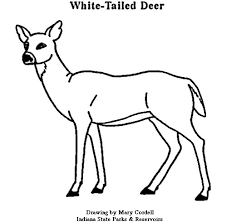 Pin White Tailed Deer Clipart Colored 6