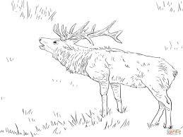 Size 1280x960 Roosevelt Elk Tule Deer Coloring Page Pages