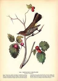 Image Is Loading 1937 Vintage AUDUBON BIRD 460 034 TOWNSEND 039