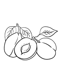 Printable Plum Coloring Page Free PDF Download At Coloringcafe