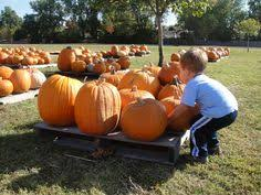 Best Pumpkin Patches In Cincinnati by Our Newest Champion Blog Post Is All About Pumpkin Patches Nearest