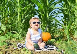 Pumpkin Patch Dixon Il by Corn Mazes From Coast To Coast Sever U0027s Maze And More