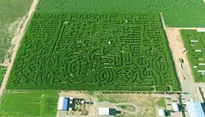 Indianapolis Pumpkin Patch Corn Maze by Get Lost In These 8 Awesome Corn Mazes In New Mexico This Fall
