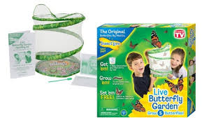 Insect Lore Live Butterfly Kit