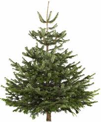 7ft Christmas Tree Uk by The Cheapest Places To Buy A Real Christmas Tree This Year