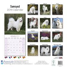 Do Samoyeds Shed All The Time by Samoyed Calendar 2017 Dog Breed Calendars 2016 2017 Wall