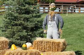 Pumpkin Patch North Austin Tx by How To Make The Most Of Fall 2016 In Austin