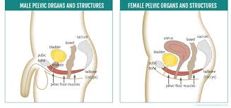 Hypertonic Pelvic Floor Muscles by Yoga For Pelvic Floor Muscles Do You Need To Strengthen Or Release
