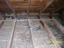 Iowa Statewide Pigeon Removal & Control, Abatement. TRappers ... 100 How To Get Rid Of Pigeons On My Roof The Loft Design Dave Keep Birds Out Birdbgone Blog 4 Ways To Of Starlings Wikihow Dairy Barns Birdfree With 3 Tips Avian Control 25 Unique Pigeon Repellent Ideas On Pinterest Obama Care Dealing Barn Farmtek Panting In Racing When Is It Normal And Not Air Rifle Hunting 6 Shooting Pigeons Pest Control Youtube Fat Cuuute Eye Spy Bird Animal Selective Breeding Deterrents Why Uv Light May Be The Answer B