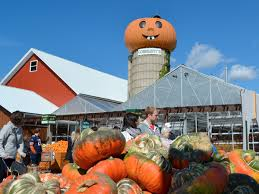 Northern Illinois Pumpkin Patches by Pumpkin Farms In Chicago Area A Fall Family Guide Chicago Tribune