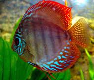 poisson eau douce aquarium tropical comment bien choisir ses poissons