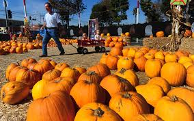 Pumpkin Patch Near Lincoln Il by Odyssey Fun World Tinley Park Il