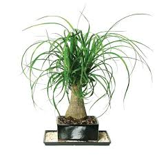 fice Ideas astounding office plants no light design Good