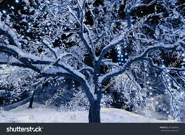 A Snow Covered Tree Outside With Christmas Lights Hanging From The Branches At Night Toned