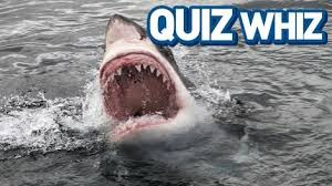 Halloween Trivia Questions And Answers 2015 by Quiz Whizzes