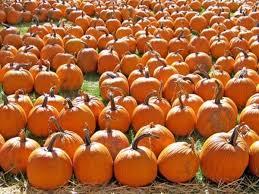 Pumpkin Patch Near Dixon Ca oct 14 pumpkin patch train hay fortress u0026 tractor rides suisun