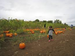 Livermore Pumpkin Patch by East Bay Pumpkin Patch Guide 510 Families