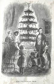 What Is The Best Christmas Tree Variety by Christmas Tree Wikipedia
