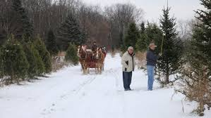 Fraser Christmas Tree Farm by Cut Down Your Own Christmas Tree Near Chicago
