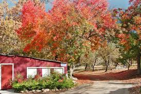 Pumpkin Patch In Yucaipa by Most Romantic Fall Date Ideas In The Los Angeles Area