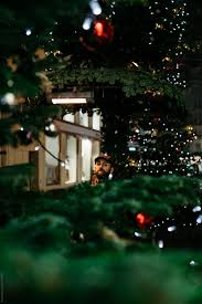 Man Looking At Camera From The Distance Among Christmas Tree Branches By Beatrix Boros For