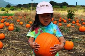 Aloun Farms Pumpkin Patch Address by Halloween Events In Hawaii Pumpkin Patches To Late Night Parties