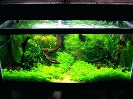 Aquascape Designs Inc Cuisine Perfect Aquascape Aquarium Designs Ideas With Hd Backyard Design Group Hlight And Shadow Design For Your St Charles Il Aqua We Share Your Passion For Success Classic Series Grande Skimmer Aquascapes Amazoncom 20006 Aquascapepro 100 Submersible Pump Pond Supply Appartment Freshwater Custom 87 Best No Plant Images On Pinterest Ideas