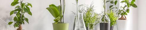 luftreinigende pflanzen blumenshop de
